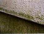 カビや藻の発生